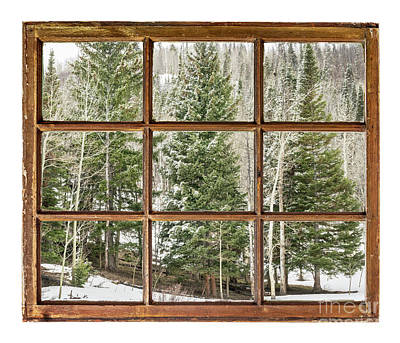 Photograph - Spruce And Aspen In Winter by Marek Uliasz