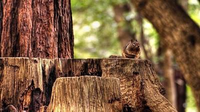 Squirrel Digital Art - Squirrel                      by Fran Sotu