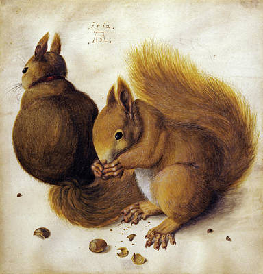 Red Squirrel Wall Art - Painting - Squirrels by Albrecht Durer