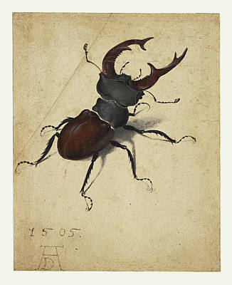 1505 Painting - Stag Beetle by Albrecht Durer