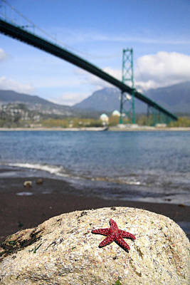 Starfish Stanley Park Vancouver Art Print by Pierre Leclerc Photography