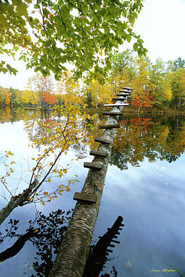 Oversized Photograph - Stepping Tree - Northwoods Wisconsin by Bruce Thompson