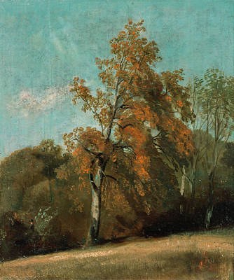 Constable Painting - Study Of An Ash Tree by John Constable