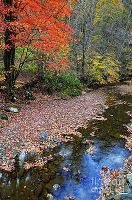 Allegheny Mountains Photograph - Sugar Maple Birch River by Thomas R Fletcher