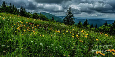 Photograph - Summer Flowers Highland Scenic Highway by Thomas R Fletcher