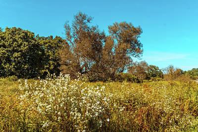 Photograph - Summer Landscape by Lilia D