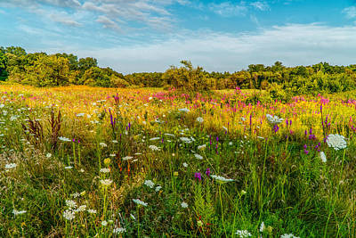 All You Need Is Love - Summer meadow by Lilia D