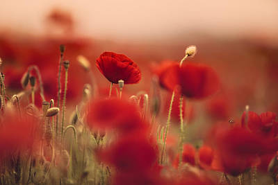 Field. Cloud Photograph - Summer Poppy Meadow by Nailia Schwarz