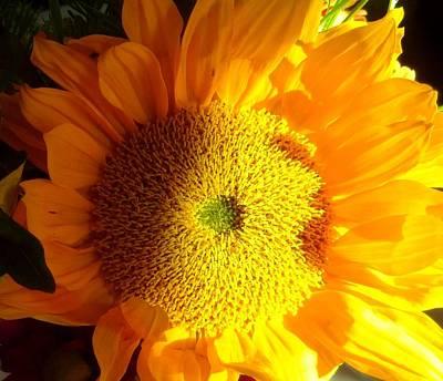 Photograph - Sunflower by Donna Spadola