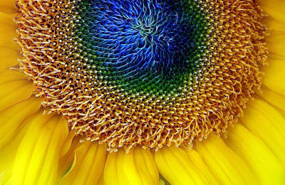 Macro Digital Art - Sunflower by Jessica Jenney