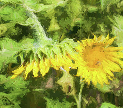 Photograph - Sunflowers by Kathy Clark