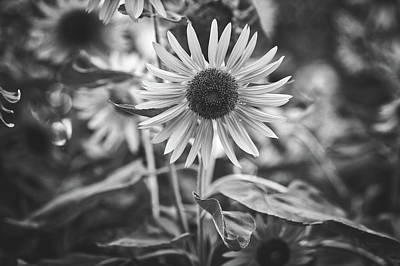 Photograph - Sunflowers by Pixabay