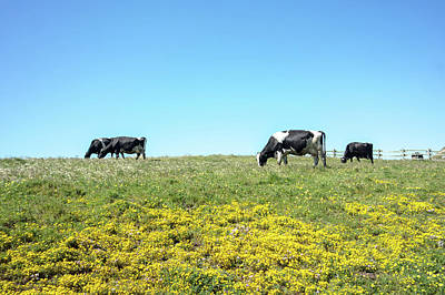 Photograph - Sunny Morning Lighting Pasture With Farm Cows by Alex Grichenko