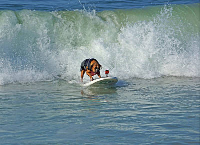 Surfing Dog Art Print