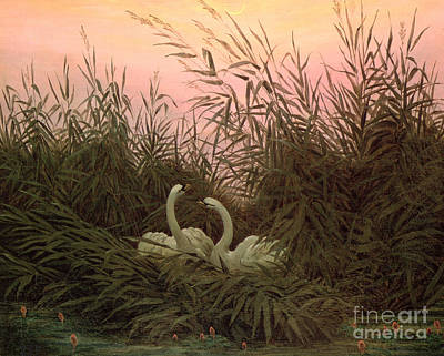 Swans... Painting - Swans In The Reeds by Caspar David Friedrich