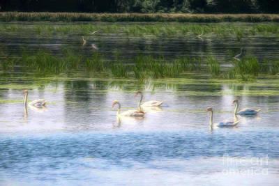 Photograph - Swans Lake by John Freidenberg
