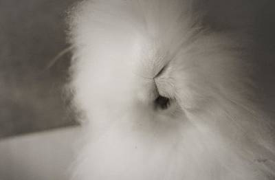 Bunnies Photograph - Sweet Bunny... by The Art Of Marilyn Ridoutt-Greene