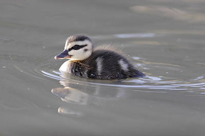 Photograph - Swim by Masami Iida