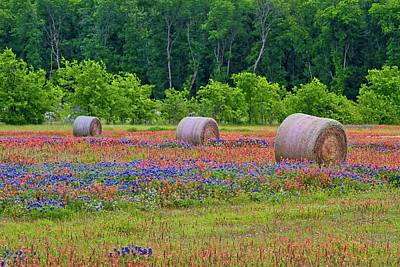 Photograph - Texas Wildflowers by John Babis