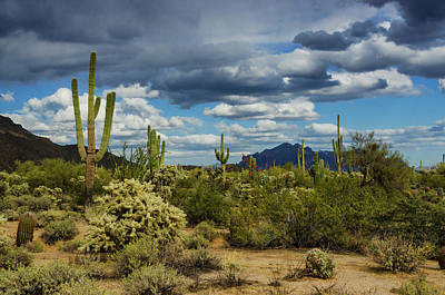 Photograph - The Beauty Of The Desert  by Saija Lehtonen