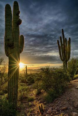 Photograph - The Beauty Of The Sonoran Desert  by Saija Lehtonen