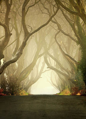 Ballycastle Photograph - The Dark Hedges by Pawel Klarecki