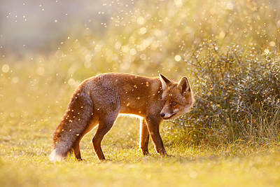 The Fox And The Fairy Dust Art Print by Roeselien Raimond