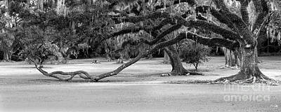 Avery Island Photograph - The Giving Tree by Scott Pellegrin