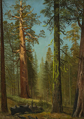 The Grizzly Giant Sequoia, Mariposa Grove, California Art Print by Albert Bierstadt