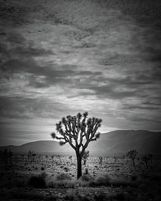 Photograph - The Joshua Tree by Peter Tellone
