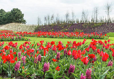 Photograph - the keukenhof in Lisse by Compuinfoto