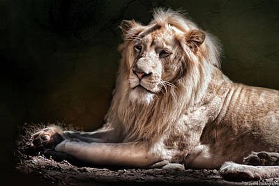 Photograph - The King by Debra Forand