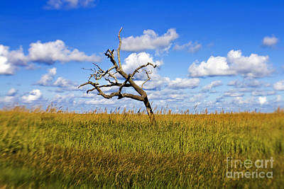 South Louisiana Photograph - The Last One Standing by Scott Pellegrin
