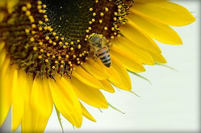 Photograph - The Pollinator by Fraida Gutovich