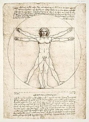 Shape Drawing - The Proportions Of The Human Figure by Leonardo Da Vinci
