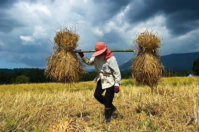 Lee Craker Royalty-Free and Rights-Managed Images - The Rice Harvest 202989 by Lee Craker
