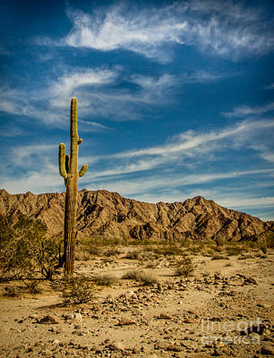 Photograph - The Saguaro by Robert Bales