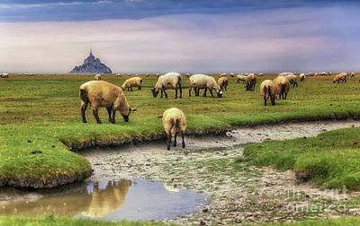 The Sheep Of Mont Saint Michel Art Print
