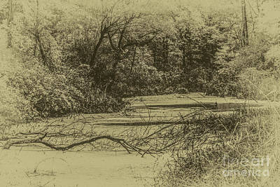 Photograph - The Swamp by William Norton