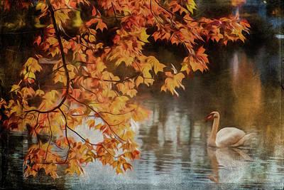 Photograph - The Swan by Cathy Kovarik