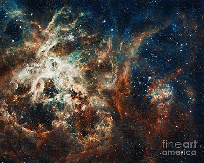 The Tarantula Nebula Art Print