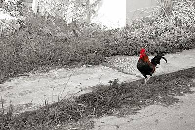Photograph - The Tipsy Rooster by JAMART Photography