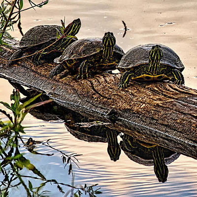 Oneal Photograph - Three's A Crowd by Priscilla Burgers