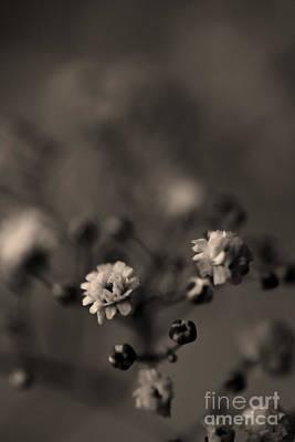 Photograph - Tiny Flower Heads by Clayton Bastiani