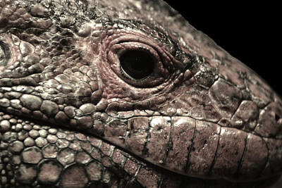 Photograph - Too Close For Comfort by Gary Smith