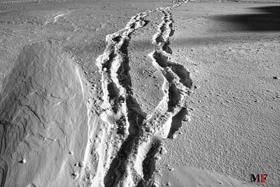 Photograph - Tracks In The Snow by Michael Frank Jr
