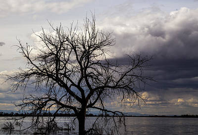 Abstract Sailboats - Tree by Angus Hooper Iii