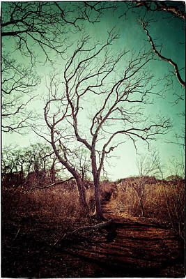 Photograph - Tree by Frank Winters