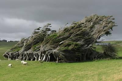 Digital Art - Tree by Super Lovely