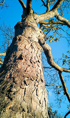 Blue Mobile Photograph - Tree Trunk by Tom Gowanlock